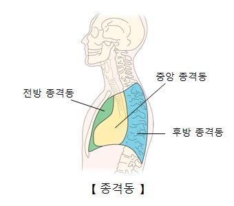 전방종격동 중앙종격동 후방종격동 위치