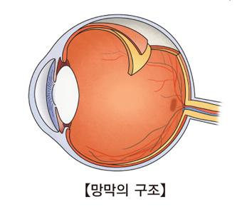 망막의 구조