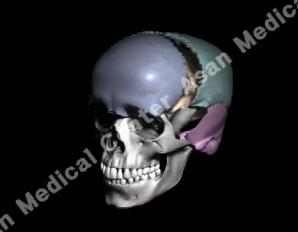 사람 모양의 두개골 예시