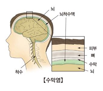 뇌,뇌척수액,척수의위치와 뇌척수액중 피부,뼈,수막,뇌의 위치