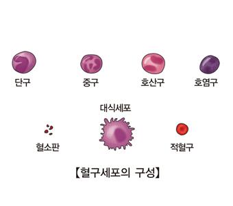단구 중구 호산구 호염구 혈소판 대식세포 적혈구등 혈구세포의 구성의 예시