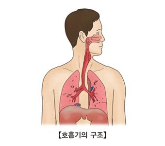 호흡기 구조의 예시