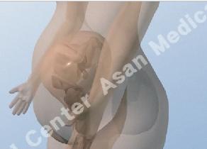 뱃속에 태아의 모습(입체 3D) 그림 예시