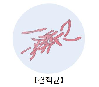 결핵균을 현미경으로 본 이미지