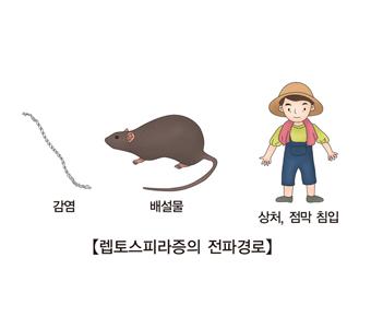렙토스피라증의 전파경로 기생충에서감염 쥐의배설물 사람의상처,점막침입