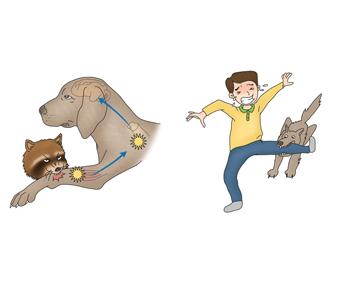 광견병에걸린너구리가개를물고 그 개가 사람의 다리를 물고 있음