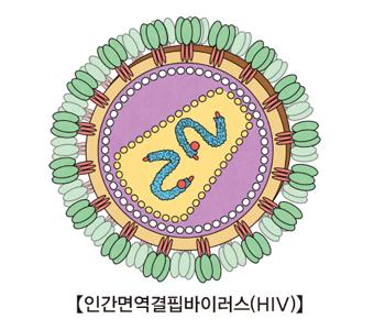 인간면역결핍바이러스(HIV)