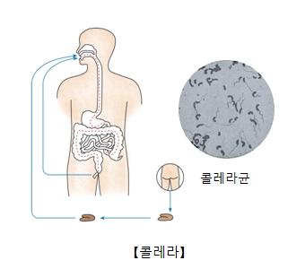 위생관리를 하지않아 소대변을 통해 콜레라에 걸릴수있는 구조 예시및 콜레라균사진