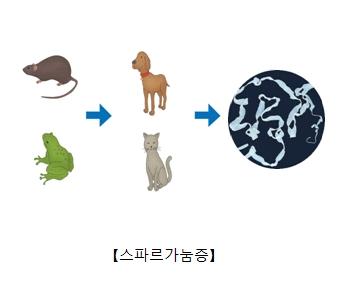 쥐 개구리 개나고양이의 먹이사슬관계및 만선열두조충의사진