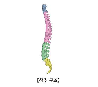 척추의 구조