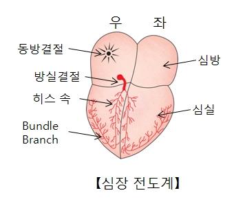 우측 동방결절 방실결절 히스속 Bundle Branch 좌측 심방 심실의 위치및 심장전도계 예시