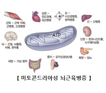 미토콘드리아성 뇌근육병증- 근육:근력약화,근병증,신경병증, 뇌:간질,뇌졸증,치매,편두통, 대장:가성협착, 중이:감각신경성난층, 췌장:당뇨, 신장:판코니신드롬,사구체이상증, 간:간병증, 눈:시신경병증,양막병증, 심장:전도장애,심근병증