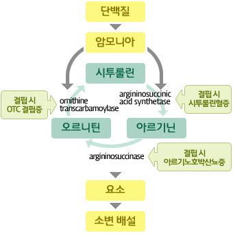 시투룰린,아르기닌,오르니틴의 요소회로-아르기닌에서오르니틴으로 가는도중 아르기닌결핍시 아르기노호박산뇨증 발병됨,오르니틴에서시투룰린으로 가는도중 오르니틴결핍시 OTC결핍증이 발병됨, 시투룰린에서 아르기닌으로 가는도중 시투룰린 별핍시 시투룰린혈증이 발병됨