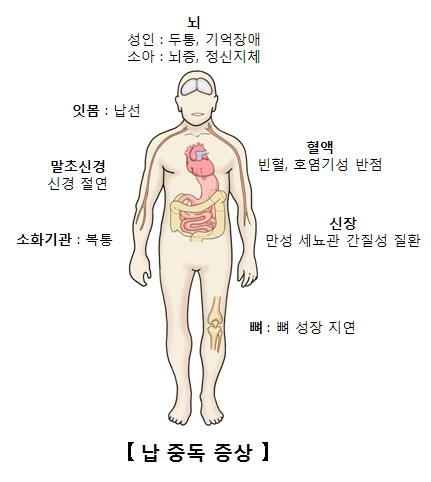 납중독증상 뇌 성인:두통,기억장애 소아:뇌증,정신지체, 잇몸:납선, 말초신경:신경절연, 소화기관:복통, 뼈:뼈성장지연, 신장:만성세뇨관간질성질환, 혈액:빈혈,호염기성반점