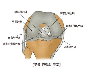 무릎관절의구조 전방십자인대,무릎연골,외측부인대,외측반원상연골,내측부인대,내측반월상연골,후방십자인대의 위치