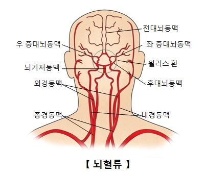 뇌혈류의 구조및 우 중대뇌동맥,뇌기저동맥,외경동맥,총경동맥,내경동맥,후대뇌동맥,윌리스 한,좌 중대뇌동맥,전대뇌동맥의 위치