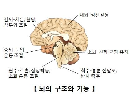 뇌의구조와기능 간뇌-체온,혈당,삼투압조절 중뇌-눈의운동조절 연수-호흡,심장박동,소화운동조절 대뇌-정신활동 소뇌-신체균형유지 척추-흥분전달로,반사중추