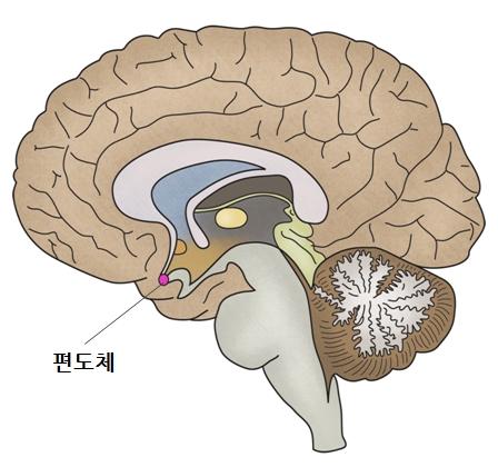 뇌 모식도