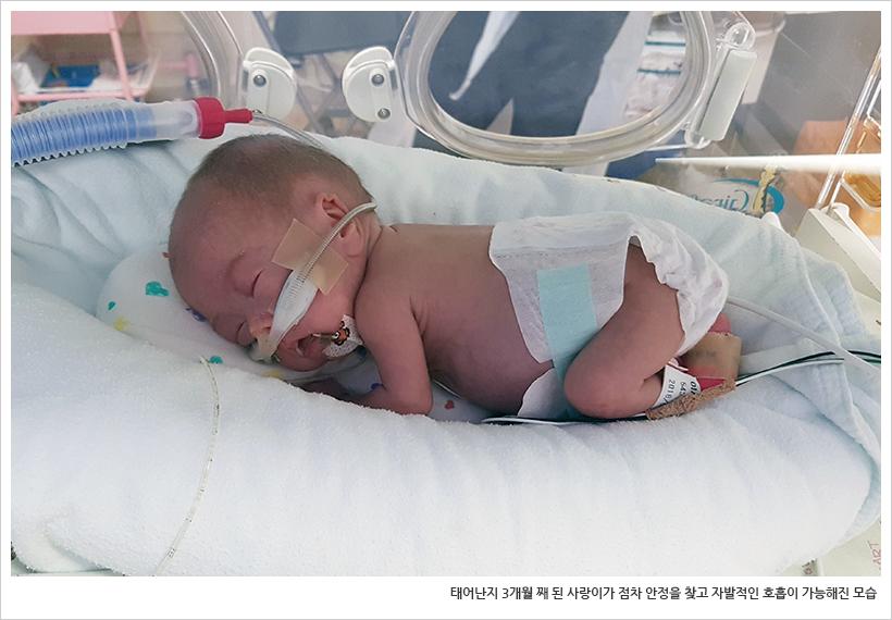 태어난지 3개월 째 된 사랑이가 점차 안정을 찾고 자발적인 호흡이 가능해진 모습
